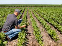 Investigan la producción de biometano a partir de residuos agrícolas