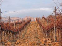Retos para el control fitosanitario de la vid en España