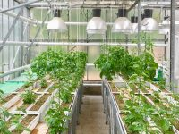Descubren el efecto de la competencia en el desarrollo de las raíces de las plantas