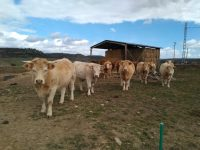 Revalorizan el alperujo para alimentación animal