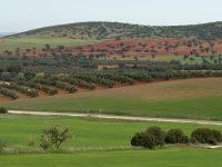 Nace AgroGreen, un proyecto internacional que trabajará por la agricultura