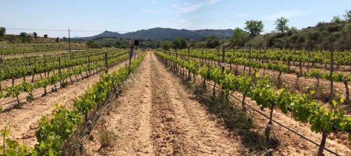 Globalviti finaliza con avances significativos en la mejora de la producción vitivinícola frente al cambio climático
