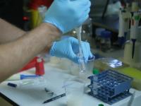 Elaboran una guía de estrategias innovadoras en bioseguridad para los centros de inseminación de porcino