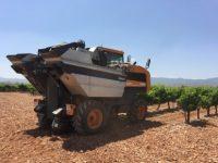 Tecnología para la trazabilidad del vino, de la cepa a la botella