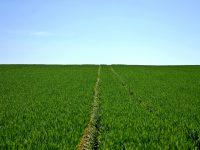 El suelo de cultivo retiene más agua si se evita el laboreo