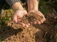 Coppereplace, un proyecto internacional para reducir el uso de cobre en el viñedo
