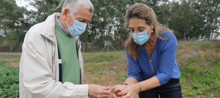 Encuentran la proporción ideal entre fósforo y zinc en suelo para una fertilización adecuada del maíz