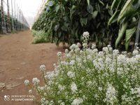 Horticultura basada en la biodiversidad en los invernaderos almerienses