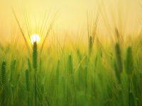 Neiker, centro pionero en la realización de investigación agraria en producción ecológica