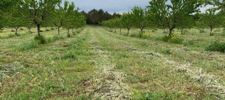 Agricultores que plantan biodiversidad