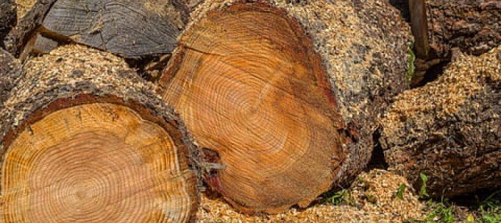 Diseñan un nuevo sistema para maximizar el aprovechamiento de la biomasa agrícola