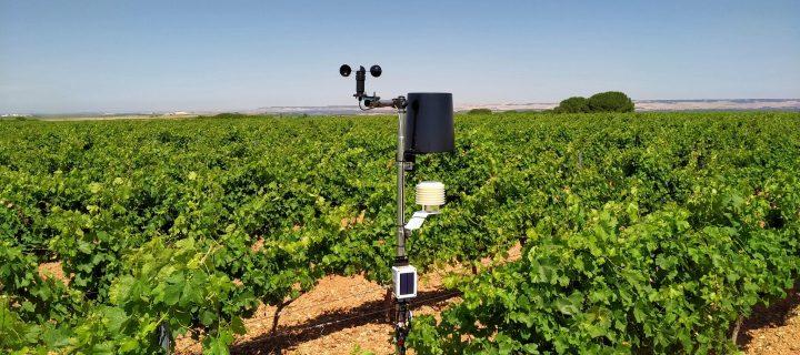 La DO Rueda instala una red de estaciones meteorológicas para controlar los viñedos desde el móvil