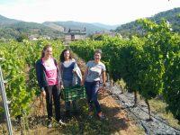 Estudian prácticas más sostenibles en viña para paliar los efectos del cambio climático