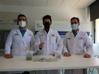 Desarrollan un sistema robotizado para el fenotipado masivo vegetal