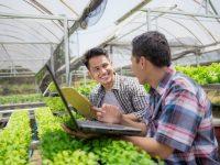 EIT Food busca start-ups agrarias que ensayen soluciones innovadoras en explotaciones agrícolas