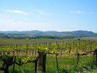 OIVE y PTV avanzan en su acuerdo de colaboración para impulsar la Innovación vitivinícola
