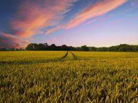 Microsensores para controlar la evolución de los cultivos agrícolas