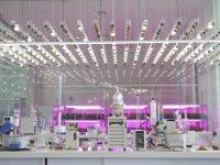 MAAViLab Primaflor & Kimitec, investigación a medida en cultivos de hoja al aire libre