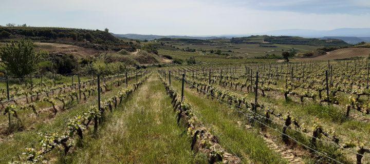 Beneficios de la cubierta vegetal en viñedos en pendiente de la Rioja Alavesa