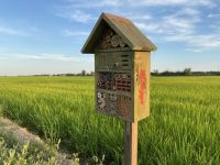Iniciativas para proteger y fomentar la biodiversidad biológica en los campos de arroz del Delta del Ebro