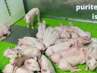 Puritermia, la nueva energía limpia que reduce las emisiones y mejora el bienestar animal