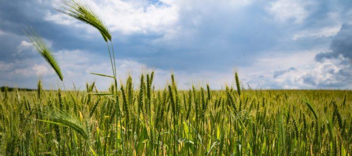 Reducen el consumo de fertilizantes utilizando agricultura de precisión