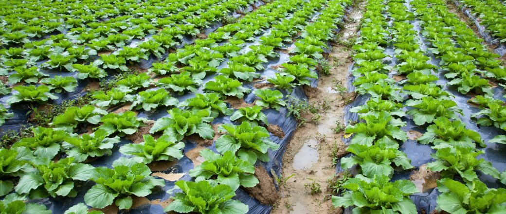 Desarrollan un proceso de degradación de plásticos agrícolas mediante el uso de insectos y lombrices
