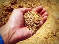 Nueva línea de créditos específica para impulsar la digitalización de las pymes agroalimentarias