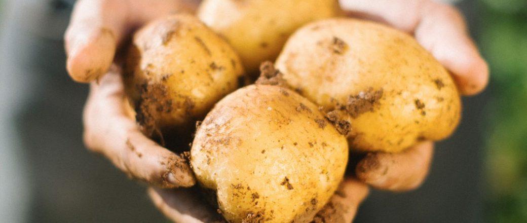 Agricultores de Castilla y León apuestan por integrar prácticas de agricultura regenerativa en sus cultivos de patata