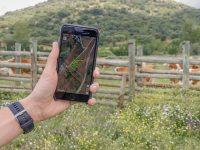 Ventajas de aplicar tecnologías de monitorización y geolocalización al ganado