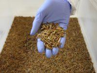Entonatur, el nuevo proyecto que introduce insectos en alimentación y en campo