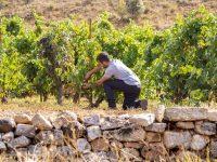 Estudian cómo evitar la pérdida de acidez en los vinos
