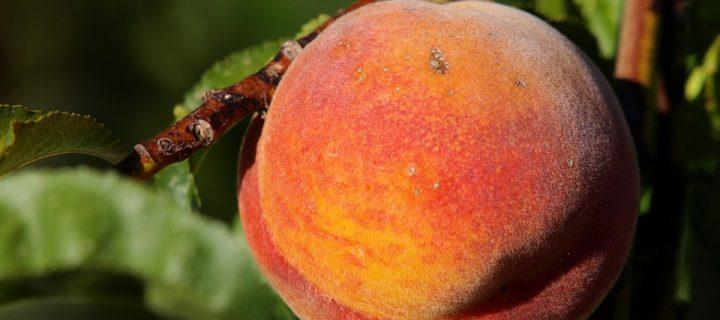 Un análisis agroeconómico avala la rentabilidad de las innovaciones que minimicen los efectos del cambio climático en frutales de hueso