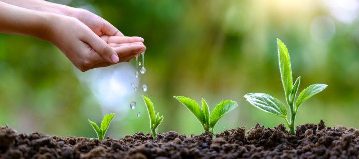 Cripthum bioestimulante húmico, el cuidado integral del suelo
