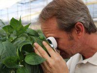 Arranca Bioinsum20, un proyecto de I+D para agroecosistemas bajo invernadero