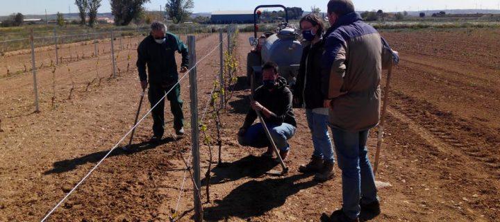 Técnicas para el control de las malas hierbas en Aragón