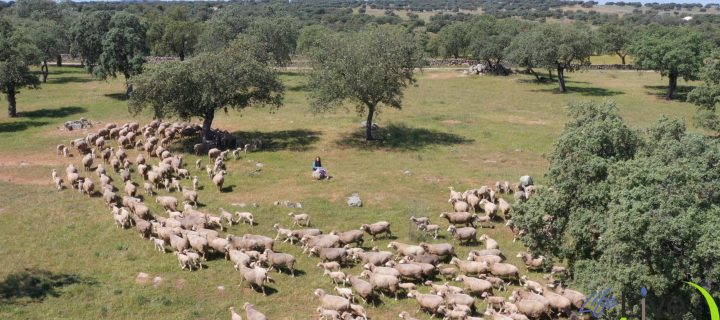 El proyecto LIFE LiveAdapt pone en marcha una campaña para promover los beneficios de la ganadería extensiva